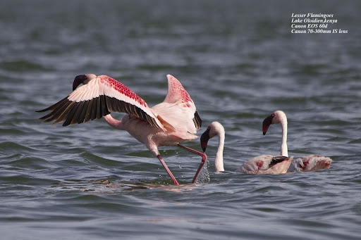 Lake Bogoria: A natural home for birds
