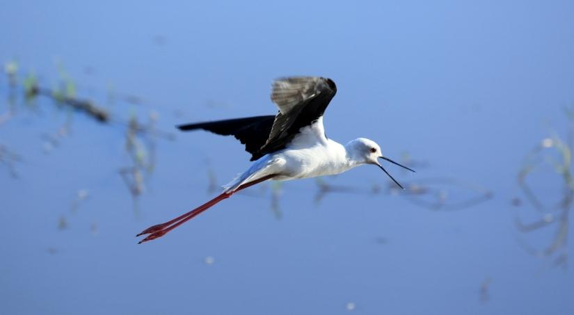Stilt flight